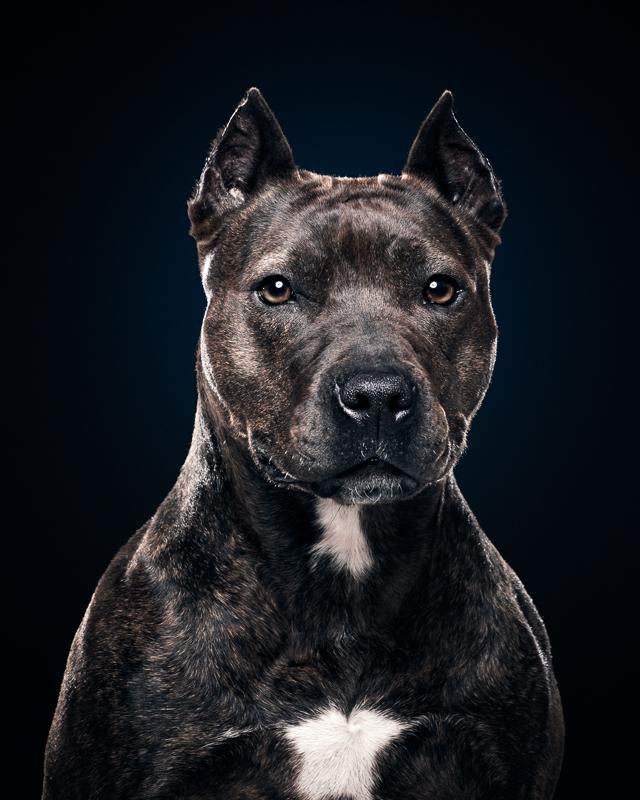 CBAS Adopted Dog Linda Blair