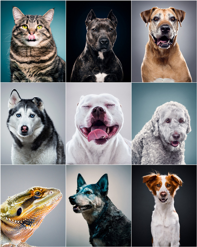 A look at my animals portrait portfolio