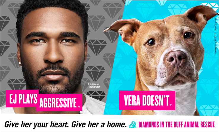 Buffalo Bills Quarterback EJ Manuel with Vera , an adoptable pit bull from Diamonds In The Ruff Rescue in Buffalo, NY