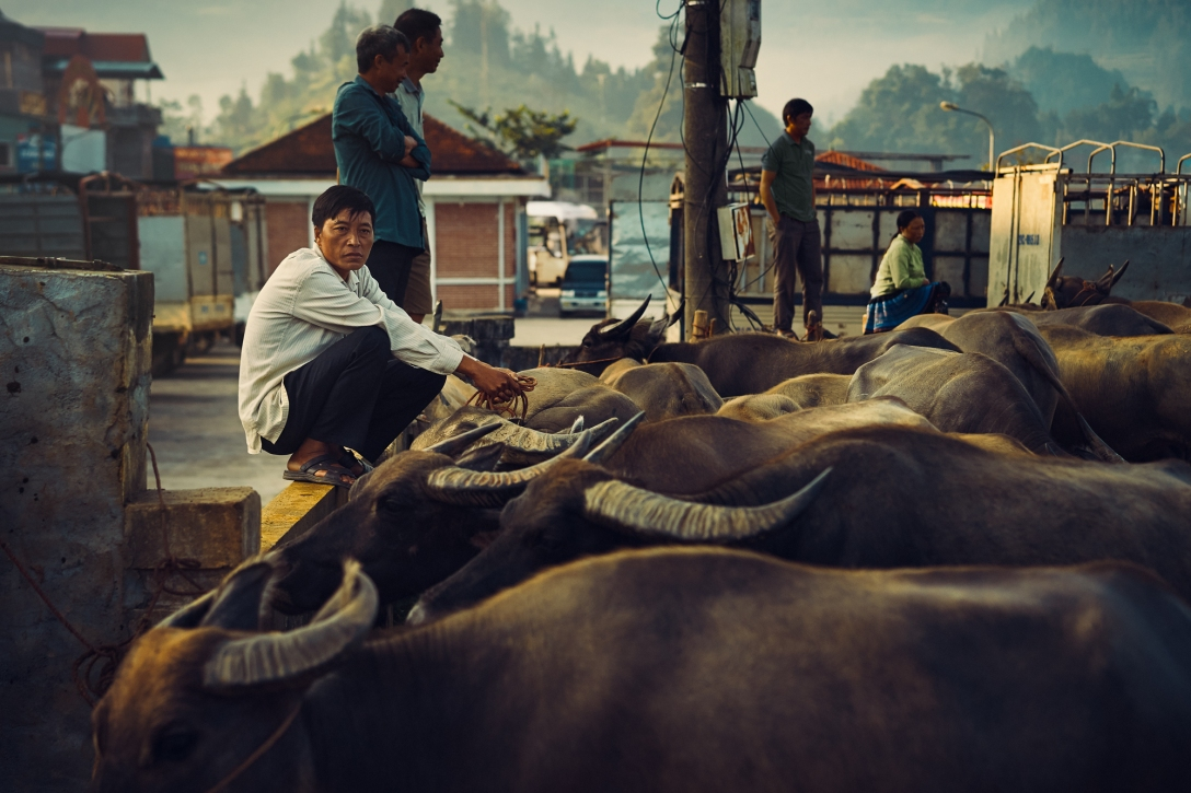 An image of a man overseeing the livestock area at the Bar Ha public market in northern Vietnam